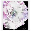 Rose In Pastels by Debbie Portwood