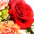Rose Is A Rose by Bobbee Rickard
