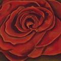 Rose by Kathy Mota