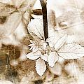 Rose Leaf Photoart by Debbie Portwood