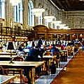 Rose Main Reading Room New York Public Library by Amy Cicconi