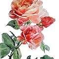 Watercolor Of Red Roses On A Stem I Call Rose Maurice Corens by Greta Corens