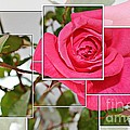 Rose Montage by Barbara Griffin
