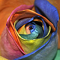 Rose Of Equality by Jim Brage