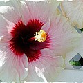 Hibiscus Flower by Art Speakman