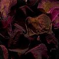 Rose Petals #4 by David Stone