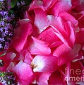 Rose Petals And Thyme by Margaret Newcomb