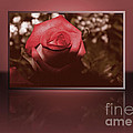 Rose Reflection 1 by Claudia M Photography