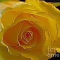 Rose -remeber Me by Sandra Clark