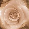 Rose Romance by Susan Garren