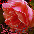 Rose Rose And Rose by Cathy Anderson