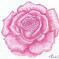 Rose Sketch  by Linda Allan