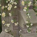 Rose Sprawling On Stone by Tom Wurl