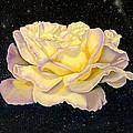 Rose Stars by Zina Stromberg