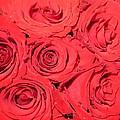 Rose Swirls by Sonali Gangane