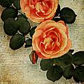 Rose Tinted Memories by Edmund Nagele