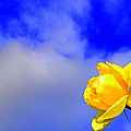 Rose To The Sky by Guy Pettingell