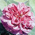 Watercolor Of A Pink Rose In Full Bloom Dedicated To Van Gogh by Greta Corens