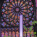 Rose Window Of St Vincent by Elvis Vaughn