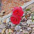 Roses Against The Wall by Cathy Anderson