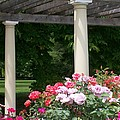 Roses And Pergola by Laurie Eve Loftin