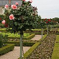 Roses And Salad - Chateau Villandry by Christiane Schulze Art And Photography