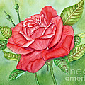 Roses Are Red by Kathryn Duncan