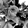 Roses Black And White by Louise Grant
