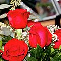 Roses by Ericamaxine Price