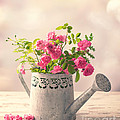 Roses In Watering Can by Amanda Elwell