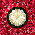 Roses Kaleidoscope Under Glass 19 by Rose Santuci-Sofranko