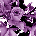 Roses - Lilac by Louise Grant
