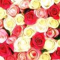 Roses Of Love by Georgiana Romanovna