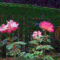 Roses Of South Pasadena 1 by Kenneth James
