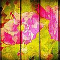 Roses On Wood by Kilmeny Boates