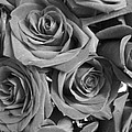 Roses On Your Wall Black And White  by Joseph Baril