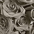 Roses On Your Wall Sepia by Joseph Baril