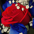 Roses - Red White And Blue by Miriam Danar