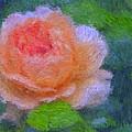 Roses Splendor by Alice Gipson
