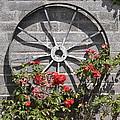 Rosewheel by Dennis Ward