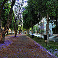 Rothschild Boulevard by Ron Shoshani