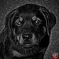 Rottweiler Pop Art 0481 - Bc1 - Greyscale by James Ahn