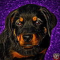 Rottweiler Pop Art 0481 - Bc1 - Purple by James Ahn