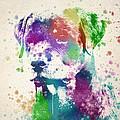 Rottweiler Splash by Aged Pixel
