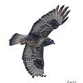 Rough-legged Hawk In Flight-signed-#4318 by J L Woody Wooden