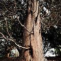 Roukenglentree by Dominique De Leeuw