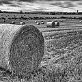 Round Bales by Nigel R Bell
