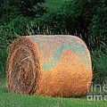 Round Hay Bale by J McCombie