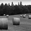 Round Hay Bales by David T Wilkinson
