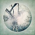 round treetops I by Priska Wettstein